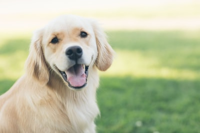 How a house intelligence committee is helping dog breeders with intelligent synonym